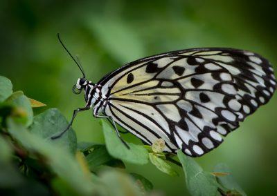 Butterfly-Farm-19-of-22